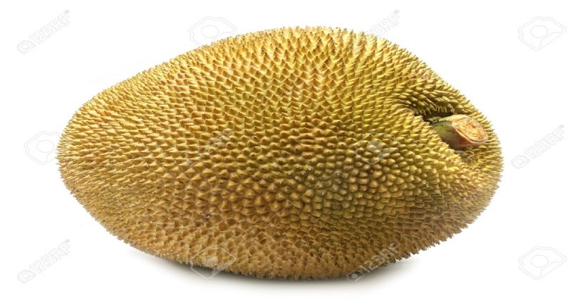http://previews.123rf.com/images/bdspn/bdspn1007/bdspn100700031/7413616-Giant-Jackfruit-of-Indian-subcontinent--Stock-Photo-jackfruit-fruit.jpg